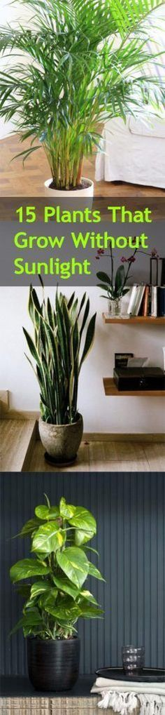 15 Plants that Grow Without Sunlight | Bless My Weeds