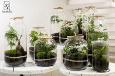 Las w słoiku - Super Express Terrarium Jar, Terrariums, Go Green, Aqua, Tanks, Flowers, Outdoor, Horticulture, Home Decor