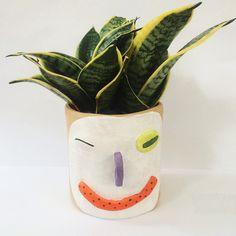 Wink pot plant