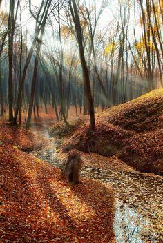 Sunlight into autumn woods