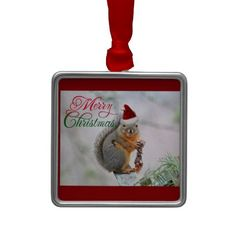 Hang Pictures Of ornaments from Zazzle on your tree this holiday season. Picture Christmas Ornaments, Christmas Pictures, Christmas Fun, Christmas Squirrel, Santa Claus Hat, Hanging Pictures, Holiday Traditions, Create Your Own, Holiday Decor