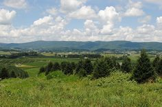Fraser Fir at Severts Elk Creek, VA Fraser Fir, Elk, Vineyard, Mountains, Nature, Travel, Outdoor, Viajes, Outdoors
