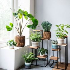 47 Plant Stand Design Ideas for Indoor House plants - Dekoration Ideen Hanging Plants, Indoor Plants, Indoor Garden, Indoor Plant Stands, Hanging Baskets, Plantas Indoor, Decoration Plante, House Plants Decor, Bedroom With Plants