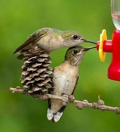 Sharing a sip of sweetness