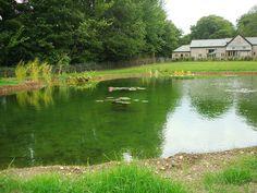 Pond Design Warwickshire, Swimming Ponds Staffordshire, Pond Landscapers Warwickshire, Water Garden Design Staffordshire, Aqua Landscape Des...