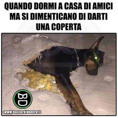 Tagga i tuoi amici e #condividi #bastardidentro #cane #coperta www.bastardidentro.it