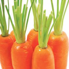 Carrot seed oil is one of the most rejuvenating and regenerating oils that can be used in skincare and helps to improve the complexion, as it helps to remove toxic build-up in the skin and eliminates excess water from the tissue.
