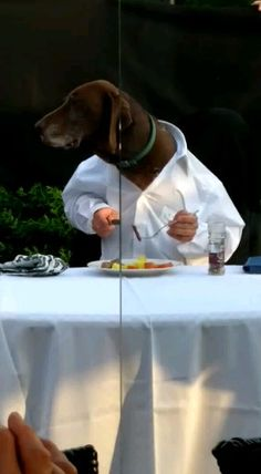 Dinner for Dog Great interaction between humans and dogs Funny Video Memes, Funny Dog Videos, Funny Animal Pictures, Cute Funny Animals, Cute Baby Animals, Funny Cats And Dogs, Cute Dogs, Dog Quotes Funny, Animal Jokes