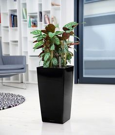 CUBICO with irrigation system: less frequent watering and better plant growth! Tall Planters, Indoor Planters, Planter Pots, Self Watering Planter, Container Gardening, Herb Gardening, Small Space Gardening, Plant Growth, Cool Plants