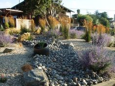 drought tolerant  Backyards | Drought Tolerant Garden With Tall Grasses,Russian Sage, And A Dry ...