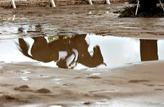 reflection in water. So cool:)