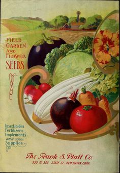 The Frank S. Platt Company's general catalogue for 1908 Vegetable Pictures, Seed Art, Vintage Seed Packets, Seed Packaging, Seed Catalogs, Garden Images, Vintage Labels, Planting Seeds, Flower Seeds