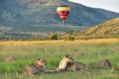 Hot-Air Ballooning in South Africa | Must-do Activities - Dirty Boots North West Province, Balloon Flights, Air Balloon Rides, Adventure Holiday, Adventure Activities, Game Reserve, South Africa, National Parks, Boots