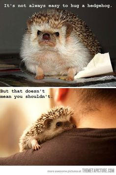 hug a hedgehog - Exactly! Hey, it's adorable, and pokey/ugly/fat/weird, doesn't matter, things need love too.