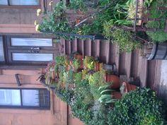 Urban Garden :: Park Slope