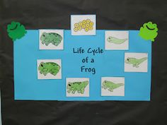 Life cycle to a Frog