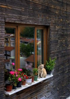 Brown wall and window frame really sets off the cat and potplants.