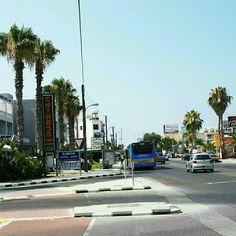 Paphos palm trees Paphos, Cyprus, Palm Trees, Island, Life, Palm Plants, Islands