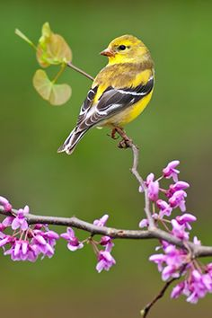 Awww ....  I'll never forget the day when I was small child and there was this huge flock -- hundreds, covering several acres -- of what must have been finches but looked to me like canaries at the age of four -- all over the part of Elmwood cemetery where my family visited each week ...