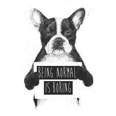Affiche d'art Balasz Solti Being normal is boring BALIBART - Décoration