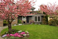 Trees add curb appeal and property value; so consider these best bets for trees to plant in your front yard. Landscaping Around House, Home Landscaping, Front Yard Landscaping, Commercial Landscaping, Driveway Landscaping, Dogwood Trees, Flowering Trees, Olivier En Pot, Landscape Design