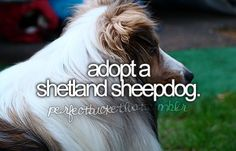 a dog.  just any dog.  but sheepdogs are good for herding kids too no?