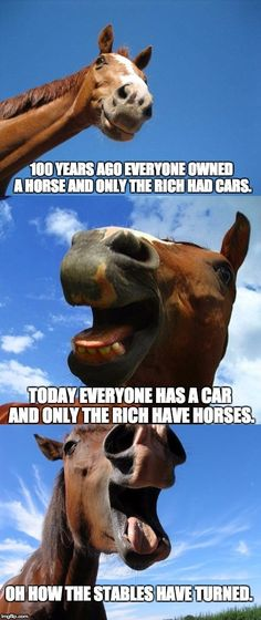 funny horse meme - Horses Funny - Funny Horse Meme - - funny horse meme Horses Funny Funny Horse Meme funny horse meme The post funny horse meme appeared first on Gag Dad. The post funny horse meme appeared first on Gag Dad. Funny Horse Memes, Funny Horses, Cute Horses, Funny Animal Memes, Cute Funny Animals, Funny Animal Pictures, Funny Memes, Horse Humor, Horse Puns