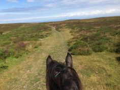 I wanted to get my youngster out to some new challenging places this year. The Quantock Hills complete with wild ponies definitely fits the bill! Absolutely beautiful place.