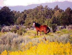 Denver Area Horse Properties And Equestrian Facilities For Sale ...