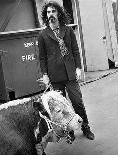 Zappa and a cow, naturally