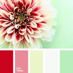 bright red, color palette, green and red, light green, pale green, pink, red and green, Red Color Palettes, scarlet color, selection of color solutions, shades of red, White Color Palettes.