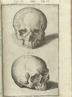 De Humani Corporis Fabrica Libri Decem pg. 3 - Spiegel & Casseri, 1627