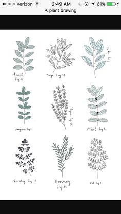 Explore the Plant Drawings 147968 Herb Print by Ryn Frank with these free drawing and coloring pages. Find here Plant Drawings 147968 Herb Print by Ryn Frank that you can print out. Drawing Sketches, Art Drawings, Drawing Ideas, Drawing Art, Simple Drawings, Nature Drawing, Drawings Of Plants, Tattoo Drawings, Plant Sketches