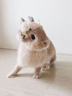 Charlie sorted xxx bunny bunnie Source by namibear Cute Baby Bunnies, Cute Baby Animals, Animals And Pets, Funny Animals, Small Animals, Tier Fotos, Cute Creatures, Animals Beautiful, Beautiful Cats