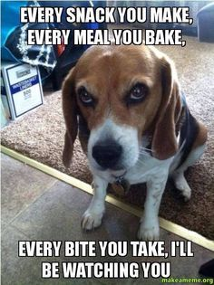 Every snack you make, every meal you bake, every bite you take, I'll be watching you  Dog humor