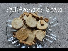 DIY Fall Hamster Treats - A step by step video about how to make hamster treats Hamster Food, Hamster Care, Hamster Treats, Hamster Stuff, Cute Hamsters, Dwarf Hamsters, Ferrets, Chinese Dwarf Hamster, Turtle Care