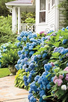 Companion Gardening Companion Plants for Hydrangeas. Every Southern beauty can use a little accessorizing. - As beautiful as they are alone, companion plants can boost the visual appeal of this Southern garden favorite Smooth Hydrangea, Hydrangea Care, Hydrangea Not Blooming, Pink Hydrangea, Pruning Hydrangeas, Hydrangea Landscaping, Planting Flowers, Flowers Garden, Landscaping Ideas
