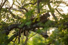 Vivid Sri Lanka! Sri Lanka, Moth, Photography, Animals, Photograph, Animales, Animaux, Fotografie, Photoshoot