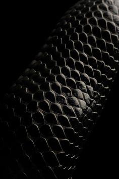 black.quenalbertini: Snake