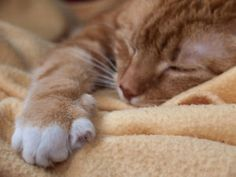 Many pet-loving homes include more than one cat. Cat companions, in fact, can provide each other with exercise, social interaction, and mental stimulation in ways that their human companions cannot. In...