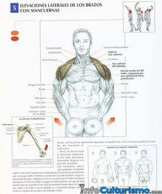 Elevaciones laterales con mancuernas (hombros y trapecios)