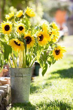 Ojai Wedding from Michael + Anna Costa Sunflower Garden, Sunflower Fields, Sunflowers And Daisies, Yellow Flowers, Wildflowers, Happy Flowers, Beautiful Flowers, Bouquet Champetre, Mellow Yellow