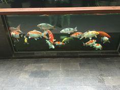 Mantap Kali Cuy, Sejuk Mata Awak Lihat Ikan-Ikan Ni......