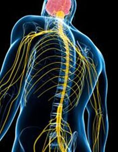 Researchers Identify New Rare Neuromuscular Disease - NeuroscienceNews.com - An international team of researchers has identified a new inherited neuromuscular disorder. The rare condition is the result of a genetic mutation that interferes with the communication between nerves and muscles, resulting in impaired muscle control. image credit: University of Rochester #neuroscience #science