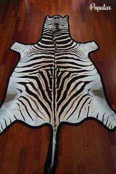 30 Best Zebra Hides And Rugs Images Skin Rug