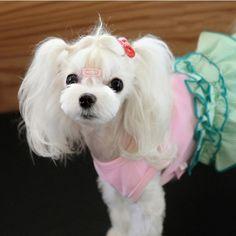 Cute Cherry Design Pet Dog Dress