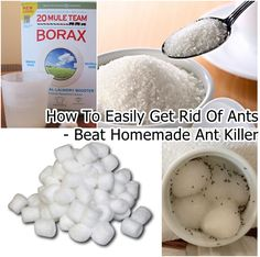 How to Get Rid Of Ants Overnight - DIY Best Homemade Ant Killer | http://www.fabartdiy.com/how-to-get-rid-of-ants-overnight-diy-best-homemade-ant-killer/