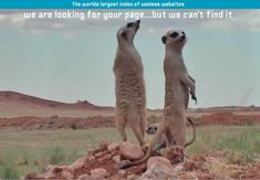 This meerkat-based 404 page is incomparable. Best 404 error page