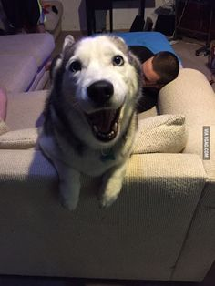 I asked if she wants to go for a ride in the car.. I think it's safe to assume she does - 9GAG