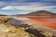 The brightly coloured waters of the Laguna Colorada, Bolivia.   Peter Cain